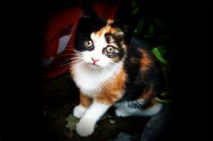 cat1 300x199 - cat1