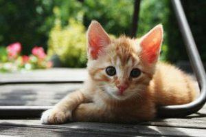 cat2 300x199 - cat2