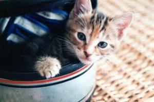 cat3 300x199 - cat3