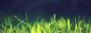 grass 300x108 - grass
