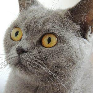 cat2 300x300 - cat2