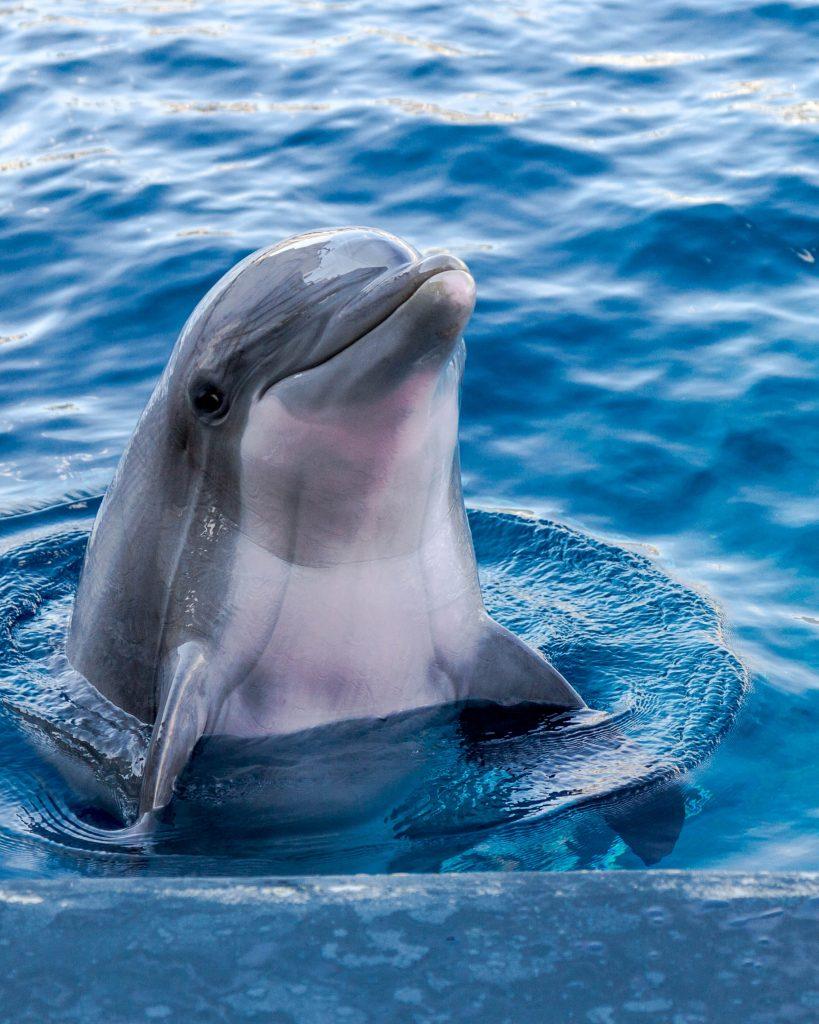 adam berkecz K6kZKJOmZrk unsplash 819x1024 - Animals That You Need To Swim With Atleast Once In Your Life