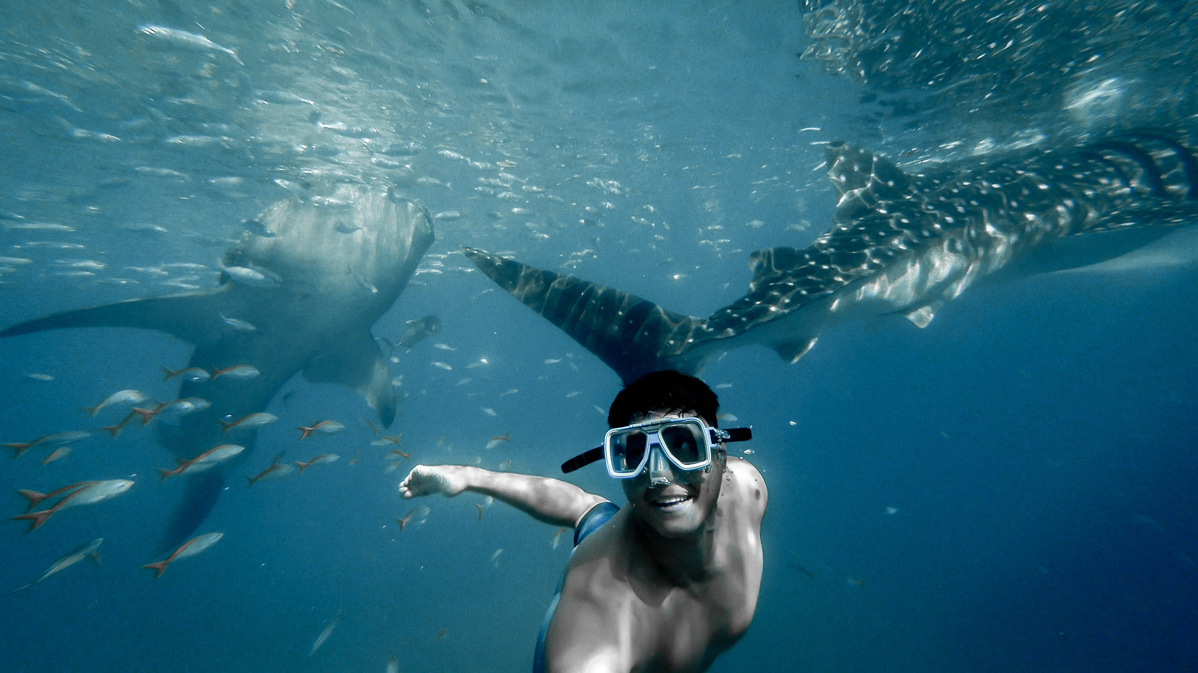 michael l 2UVX62wP vo unsplash 1 - Animals That You Need To Swim With Atleast Once In Your Life