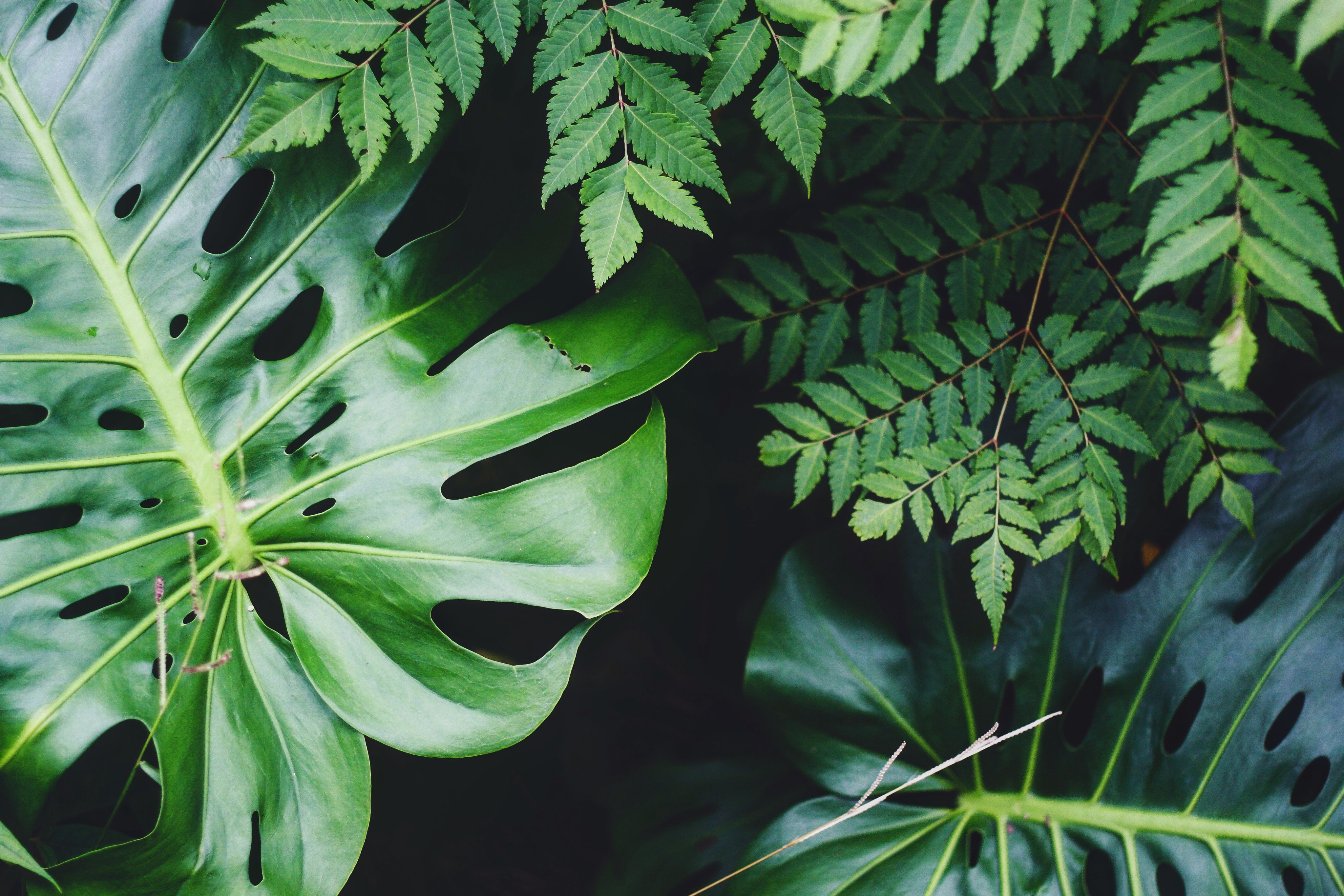 jackie dilorenzo RyLsRzy9jIA unsplash - Why Are Plants So Important In Your Life